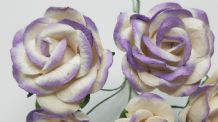 LIGHT LILAC WHITE GRANDIFLORA (3.5 cm) Mulberry Paper Roses